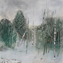 Conifers-and-Birch-Trees