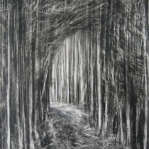 Path-Through-the-Forest-II